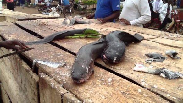 1 Day Jinja Fishing Tour in Uganda