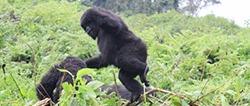 10-days-congo-safari