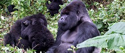 12-days-congo-safari