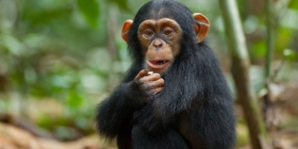 2 Days Chimpanzee Safari in Rwanda to Nyungwe Forest National Park