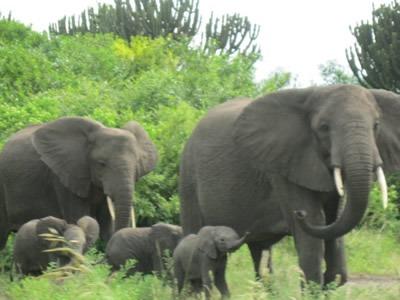 Uganda safari-tour