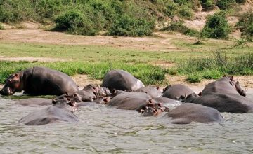 3 Days Queen Elizabeth Park Safari Uganda tour