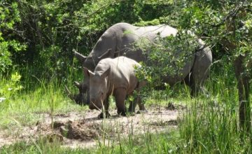 3 Days Uganda Safari to Murchison Falls National Park, 3 days Murchison Falls Safari Uganda