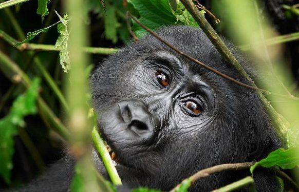 5 Days Africa Gorilla tour in Uganda uganda tours