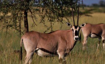 5 Days Ethiopian Safari tour to Awash N.P