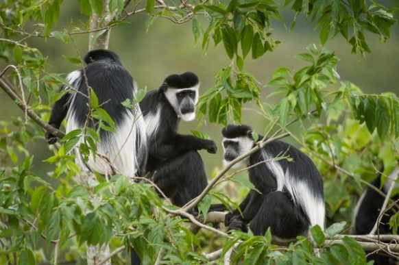 5 Days Uganda Tour with Primates Trekking