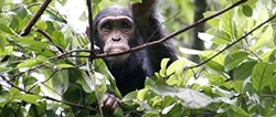 Uganda Self Drive Gorilla safaris 6 days