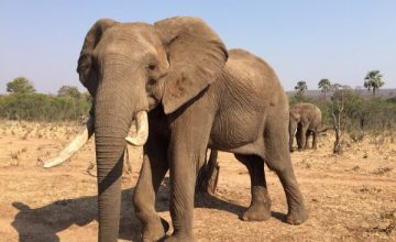 7 Days North Zimbabwe Safari Tour Adventure
