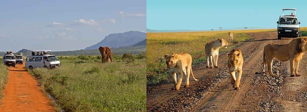 Amboseli-National-Park-gamedrive-kenya