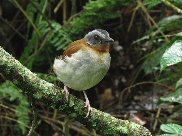 Birding Africa Uganda Tour 21 Days