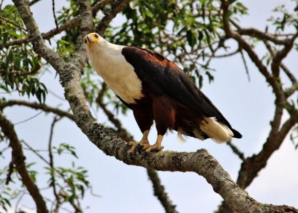 Birding as a Rwanda Safari activity in Akagera National Park