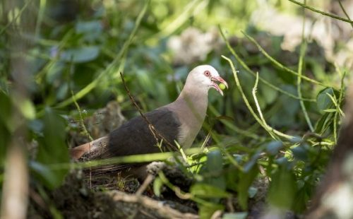 Birdlife species in the Methaniko wildlife reserve