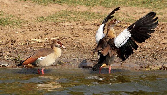 What Makes Each National Park in Uganda unique? - Uganda Safari News