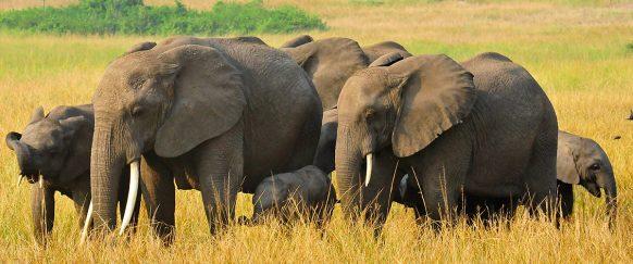 15 Days Africa Adventure Vacation Safari Holiday in Uganda tour