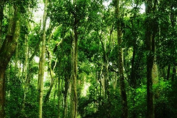Bugoma Ecotourism Site