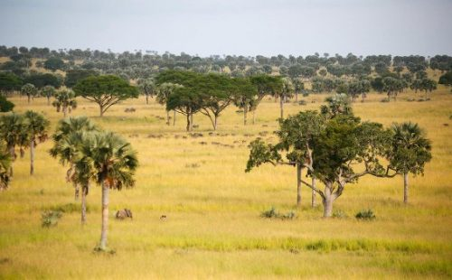 Bugungu wildlife reserve Community walks