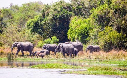 Bugungu wildlife reserve Game drive