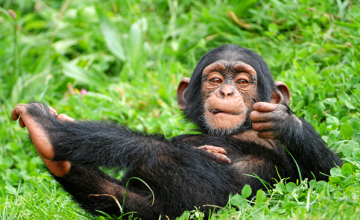 2 days Chimpanzee Trekking Safari in Uganda to Budongo Forest uganda tour