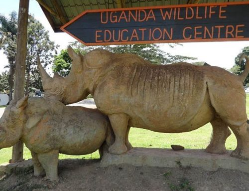 The Uganda Wildlife Education Centre To Host the 2019 Zoohackathon Competition