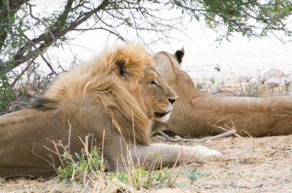 Etosha East Namibia Safaris tour