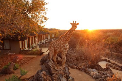 Etosha National Park Namibia Safari Tours Package