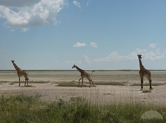 etosha-salt-pan-safaris-in-uganda