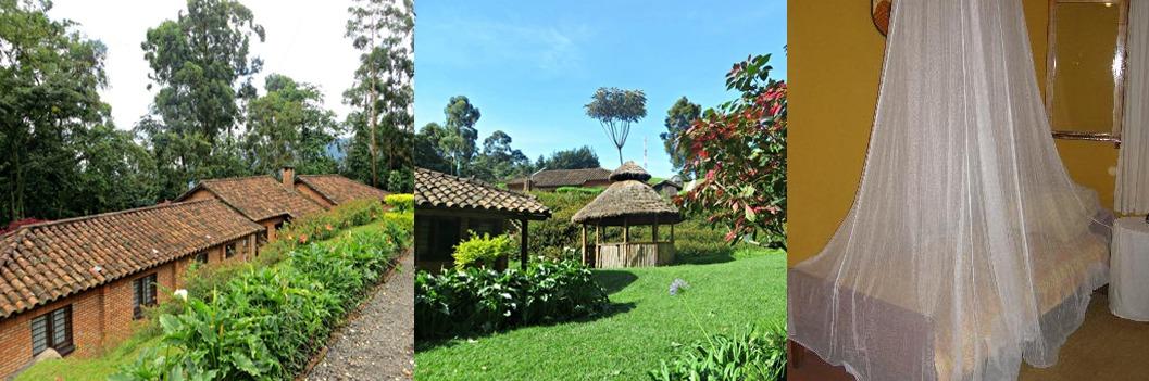 Gisakura Guesthouse-nyungwe-rwanda-safari