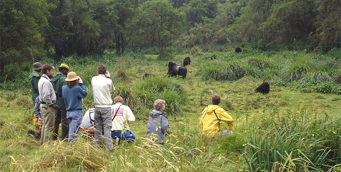 Tourists during a Rwanda gorilla trekking safari