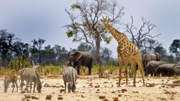 Hwange National Park Zimbabwe Safari Tours Package