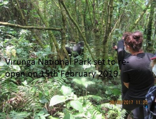 Virunga National Park is set to re-open on February 15th 2019