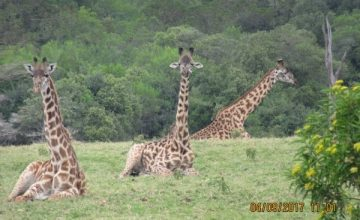 2 Days Tanzania Safari to Lake Manyara National Park