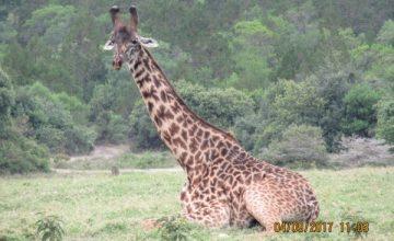 2 Days Tanzania Safari to Ngorongoro National Park,