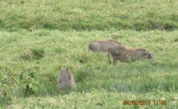 5 Days Kenya Wildlife Safari to Amboseli and Tsavo National Parks