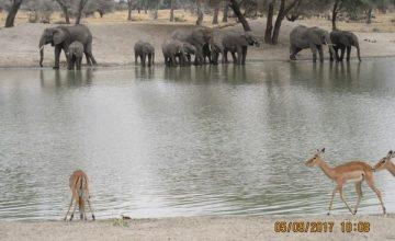 5 Days Wildlife safari in Tanzania, African Wildlife Tanzania Safari Tour