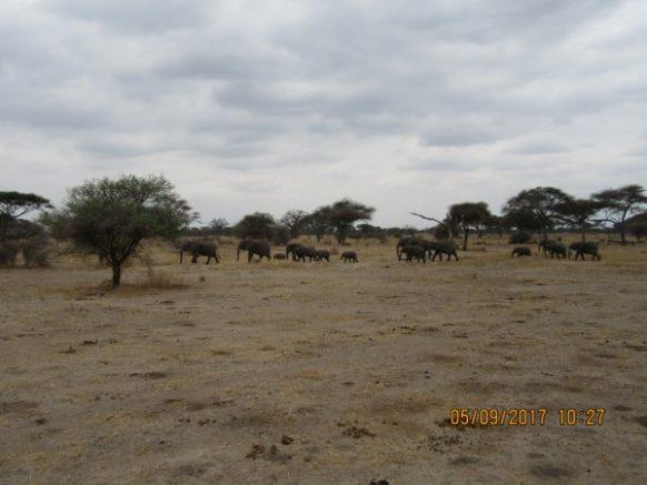 5 Days Wildlife Safari in Kenya to Maasai Mara, Lake Nakuru and Samburu