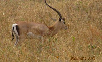 2 Days Tanzania Safari to Tarangire National Park,