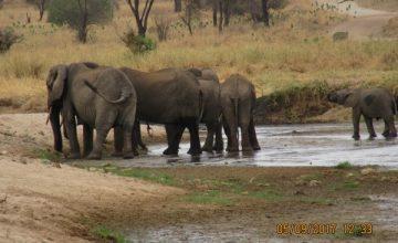 6 Days Tanzania Safari Tour