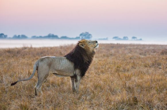 Kafue National Park Zambia Safari Tours Package