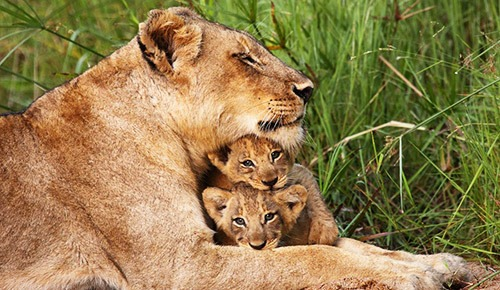 Kruger National Park South Africa Safari Tours