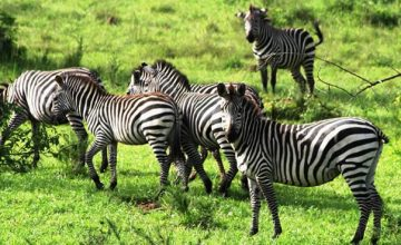 Short Uganda Safari to Lake Mburo National Park 2 Days uganda tour