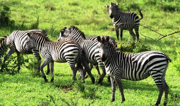 Image result for mburo national park