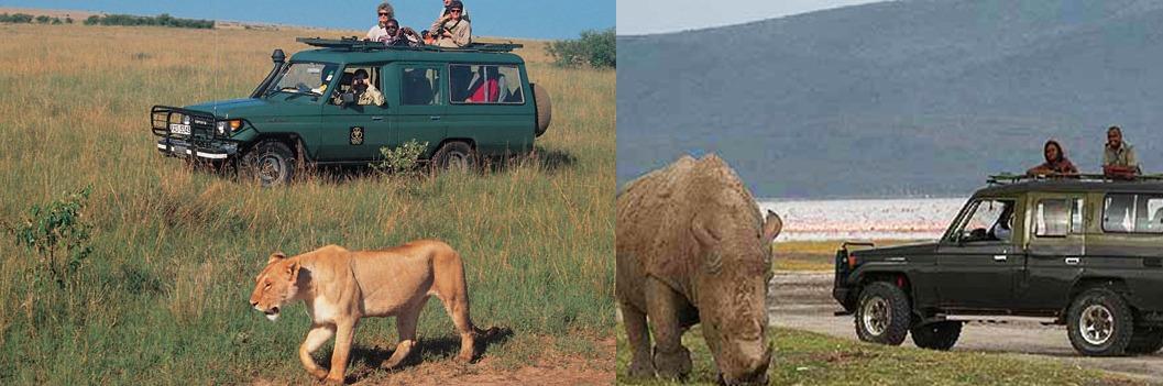 Lake Nakuru National Park game drive