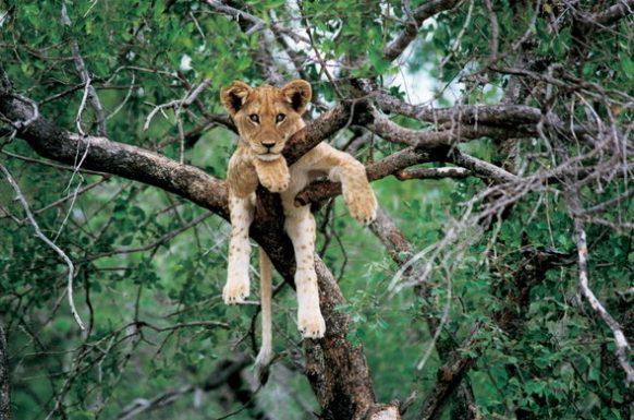 Luangwa National Park Zambia Safari Tours Package