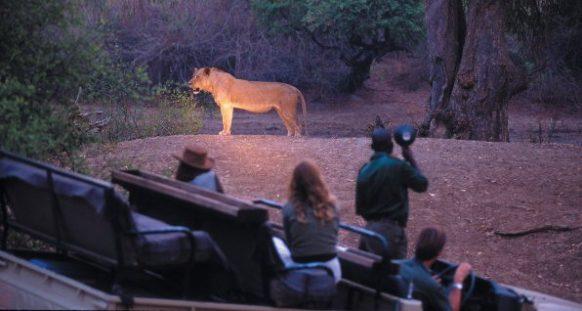 Luangwa National Park night drive Zambia Safari Tours Package