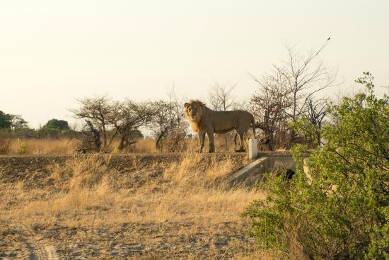 Mahango Game Reserve Namibia Safari tour