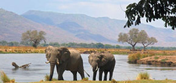 Mana Pools National Park Zimbabwe Safari Tours Package