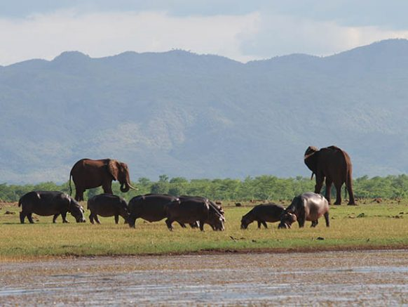 Matusadona National Park Zimbabwe Safari Tours Package