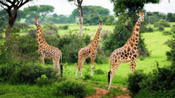 Murchison Falls Wildlife Safari in Ugand 3 Days