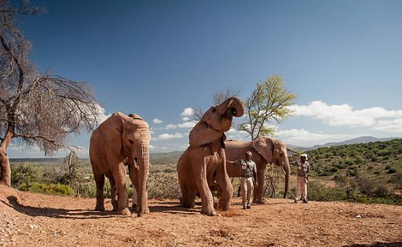 6 Days Garden Route & Addo Adventure South Africa Tour