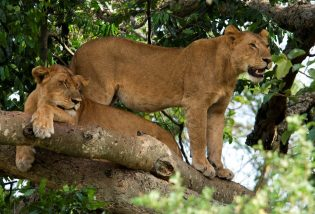 Queen Elizabeth National Park,Uganda wildlife safari tour in Uganda
